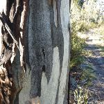Tree beside track (298202)
