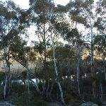 Glimpse of the Thredbo River (302782)