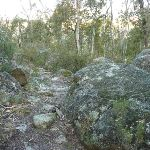 Granite Boulders on the Pallaibo Track (303157)