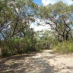 Perimeter Trail near Terrey Hills (306182)