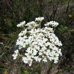 Wild Flowers (306464)