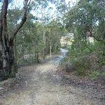 Perimeter Trail near Terrey Hills (306806)