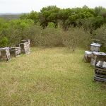 Bee hives (30718)