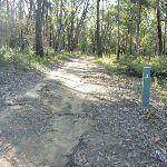 Perimeter Trail near Terrey Hills (307274)