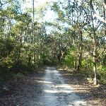Perimeter Trail near Terrey Hills (307325)