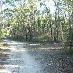 Perimeter Trail near Terrey Hills (307328)