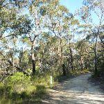Perimeter Trail near Terrey Hills (307394)