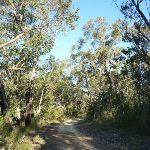 Perimeter Trail near Terrey Hills (307403)