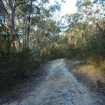 Perimeter Trail near Terrey Hills (307679)