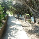 Track down to Congwong Beach near La Perouse (308612)