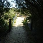 Little Congwong beach track near La Perouse (308744)