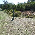 Henry Head Track near La Perouse (308879)