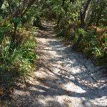 track near La Perouse (309200)