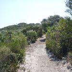 Henry Head Track near La Perouse (309524)