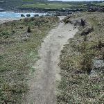 Track on Cape Banks in Botany Bay National Park (310163)