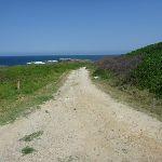 Cape Banks management trail towards Cape Banks (310286)