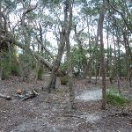 Chinamans Gully Campsite (314534)