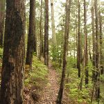 Track and forest near Muirs Lookout (320081)