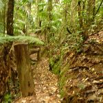 Timber post and track close to Muirs Lookout in the Watagans (320243)