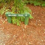 Walking track sign in Pines campground  (320609)