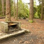 Fireplace in the pines camping ground in the Watagans (320612)