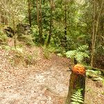 Track through forest in the Watagans (320693)