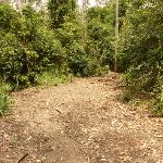 Management trail in the Watagans (321515)