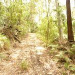 Steep track in the Watagans (321542)