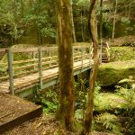 Timber bridge near the Moss Wall in the Watagans (322673)
