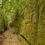 Moss Wall near Boarding House Dam in the Watagans (322718)