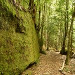 Moss Wall near the Boarding House Dam in the Watagans (322724)