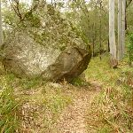 Large rock by the track on the way to Monkey Face cliff in the Watagans (323303)