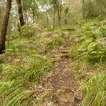 Steep track and timber steps near Monkey Face cliff in the Watagans (323318)