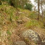 Rocky track near the monkey face cliff in the Watagans (323336)