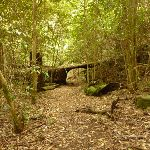 Track through tree trunk in rainforest in the Watagans (323900)