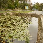Pond at Mt Sugarloaf car park near Newcastle (324041)