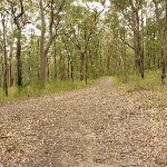 Management trail through forest near Mt Sugarloaf (324635)
