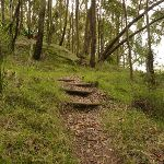 Timber steps near Mt Sugarloaf (324698)