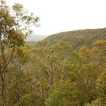 Views of forest near Mt Sugarloaf (324803)