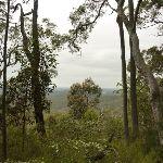 Forest views near Mt Sugarloaf (325070)
