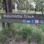 At Int of Lady Carrington Drive and Walllamarra Bushtrack (32759)