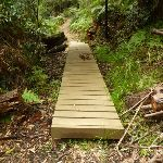 Board walk south of Berowra Creek campsite (328997)