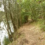 Walking beside Berowra Creek (329345)