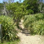 Jibbon Beach end of track (32957)