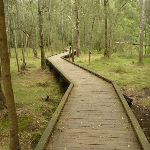 Northern Crosslands boardwalk (330236)
