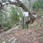 Sign on track beside Berowra Creek (330380)
