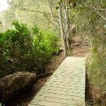 Section of boardwalk east of Berowra Creek Lookout (330422)