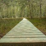 Board walk near Calna Creek (330812)