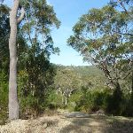Trail west of Berowra (331934)