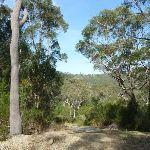 Trail west of Berowra (331934)